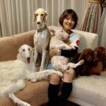 LAMIUELLE SHOW DOGS / LHM DACHSHUND, M BULL TERRIER